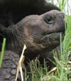 31) Galapagos Reisefilm auf USB Stick Wartezimmer TV