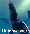 Activity206 Klangfläche, Wellenförmig, Einfühlsam, Unterwasser,  Mystisch