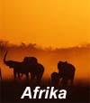 15 World Afrika Sounddesigns gema frei