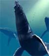Ocean 2 Gemafreie Musik CD