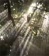 67) Regen im Wald für Wartezimmer TV